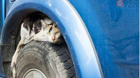 悲しい事故防ぐ「猫バンバン」がヤバい・・・
