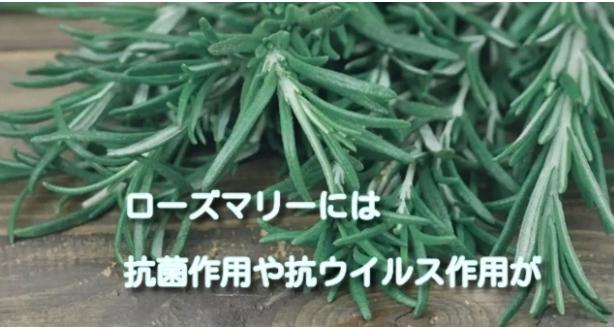 健康茶の種類と効能そしてローズマリー茶の作り方で免疫力を高めよう!